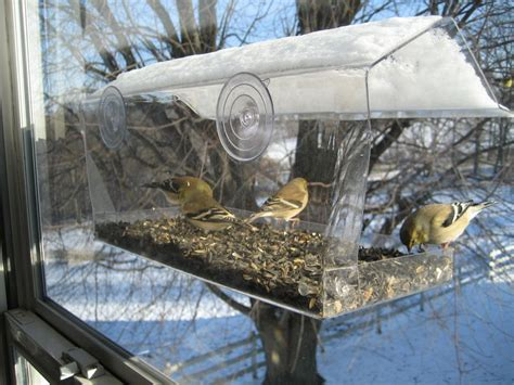window bird feeder window bird feeder birds right outside your window