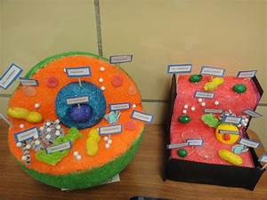 Katie U0026 39 S Klassroom  Cell Functions Project  5th Grade