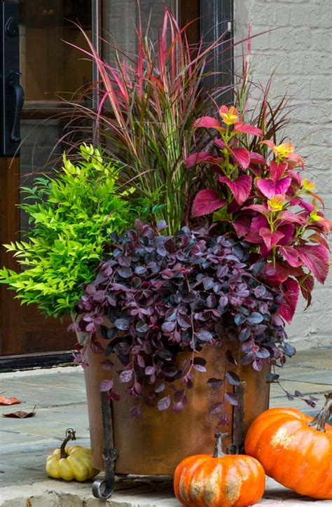 fall flower pot ideas fall container purple pixie 174 loropetalum lemon lime nandina fireworks pennisetum