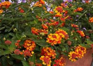 Balkonkasten Bepflanzen Südseite : sommerbepflanzung balkon balkonbepflanzung im sommer s dseite oder nordseite beispiele ~ Indierocktalk.com Haus und Dekorationen