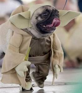 star wars dog costume 5
