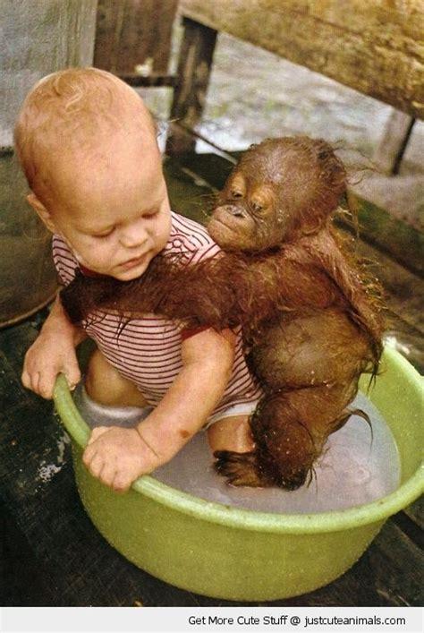 Gazgas Monkey 110 Image by 110 Best Images About Monkeys Majmok On Baboon