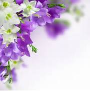 White And Purple Flowe...