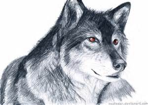 Drawing Wolves