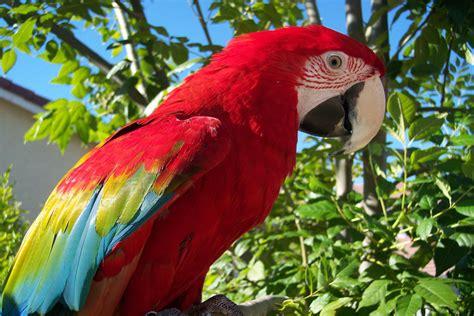 what do parrots eat where do parrots live