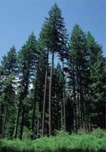 biogeoclimatic zones of columbia interior douglas fir