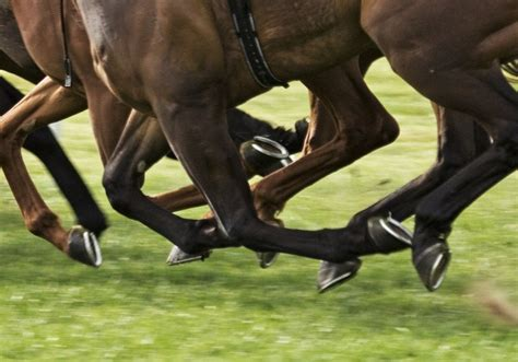 why do horses need shoes why do horses wear shoes 187 science abc