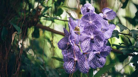full hd wallpaper orchid jungle violet foliage desktop