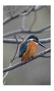 Download 1920x1080 wallpaper bird, tree branch, blur ...