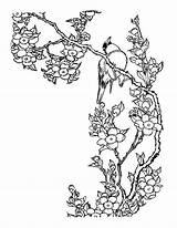Coloring Cherry Blossom Popular sketch template