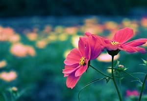 Cute Flower Wallpapers - WallpaperSafari