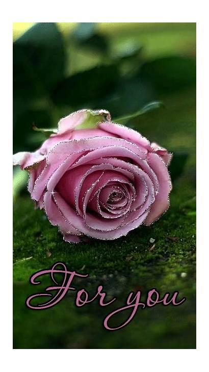 Roses Rose Violets Contribution Thanks Decentscraps Rosas