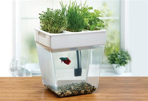 aquaponics at home a modern farmer review of turnkey