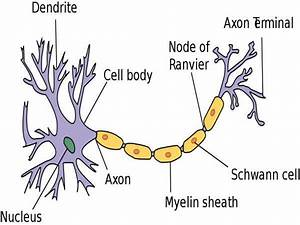 What Are Important Diagrams For Class 12 Biology Board