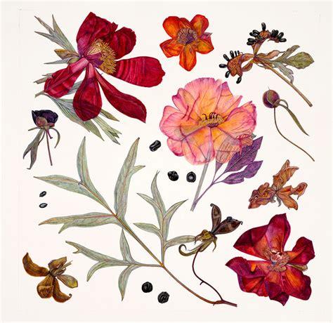 Peony Specimens  Rachel Peddersmith  Kew Gardens