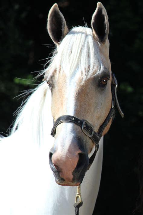 Classic Goldrush - Free Riding NZ