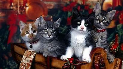 Christmas Cats Cat Desktop Backgrounds Decorations Background