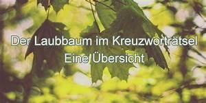 Ein Kunstleder Kreuzworträtsel : der laubbaum im kreuzwortr tsel wort ~ Eleganceandgraceweddings.com Haus und Dekorationen
