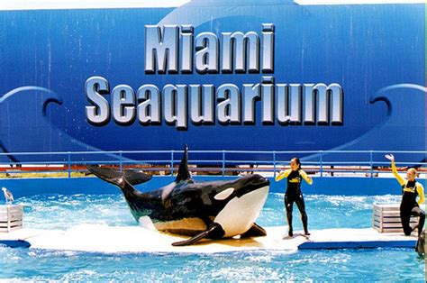 florida miami seaquarium 1995 flickr photo