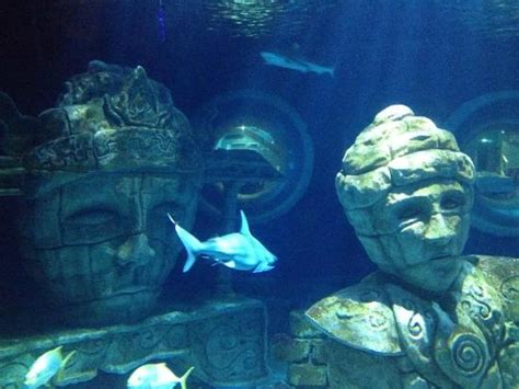 aquarium sea val d europe picture of aquarium sea val d europe marne la vallee tripadvisor