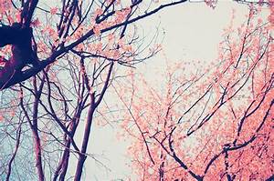 photography tumblr vintage flowers background 1 hd ...