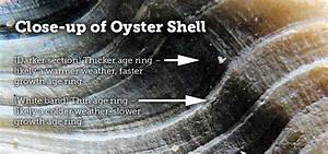 Did You Know  Oyster Dating