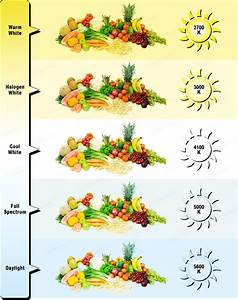 Cfl Grow Lights For Vegetative Growth  A Beginner U0026 39 S Guide