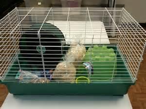 hedgehog complete cage setup peeps n paws