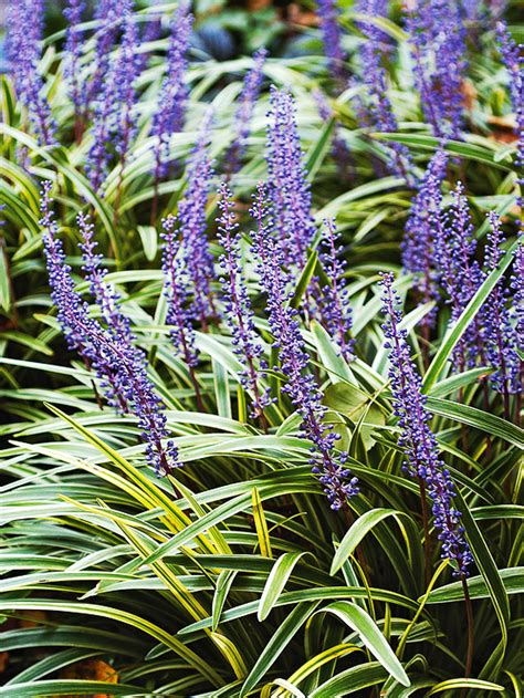 best plants for shade the 10 best perennials for shade