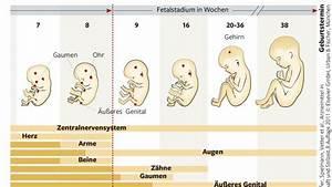 Schwangerschaft Wochen Monate Berechnen : schwangerschaft 2 woche ssw 1 ~ Themetempest.com Abrechnung