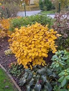hortensienbeet pflanzen