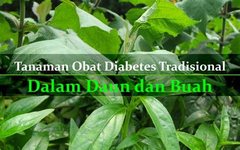 tanaman obat diabetes tradisional bagian daun buah