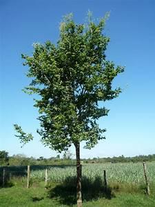 Kleine Bäume Bis 3m : affentopf baum regenwald baumpatenschaften ein ~ Articles-book.com Haus und Dekorationen