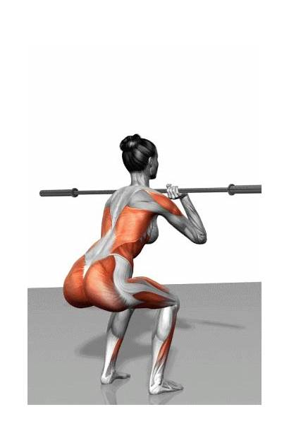 Exercise Squat Squats Muscles Fitness Workout Illustrations