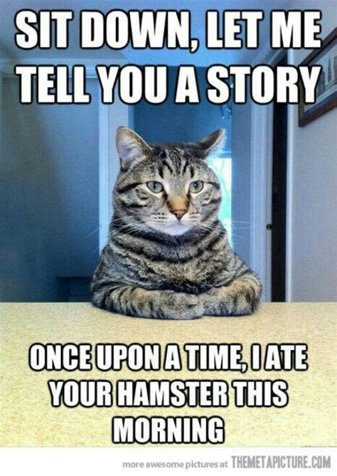 funny animal jokes  memes quotes  humor