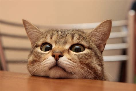 22 Absolutely Adorable And Cute Cat Photos