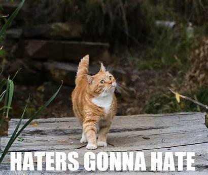 Meme Cat Funny Grumpy Humor Quote Wallpapers