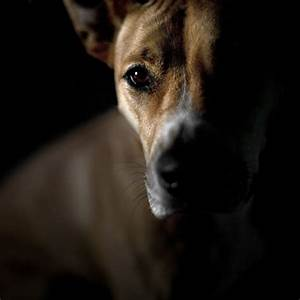 Can Dogs See in the Dark?