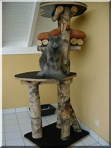 Arbre A Chaton : arbre a chat a faire soi meme recherche google floppy ~ Premium-room.com Idées de Décoration