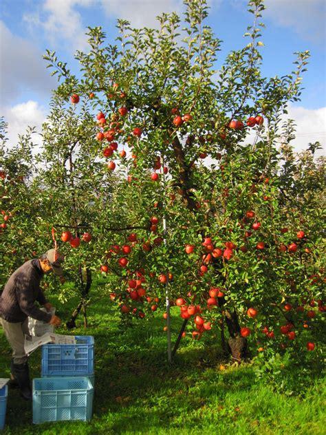 Garten Gestalten Obstbäume by リンゴの木