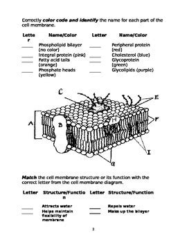 Cell Membrane Worksheet By Marta Dabrowska  Teachers Pay Teachers