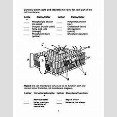 Cell Membrane Worksheet By Marta Dabrowska  Teachers Pay Teachers