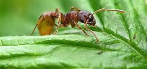 Wie Bekämpfe Ich Ameisen : 4 gr nde warum sie die denkweise einer ameise bernehmen ~ Whattoseeinmadrid.com Haus und Dekorationen