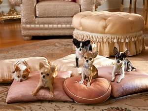 Beverly Hills Chihuahua 2 - Puppies - 1920x1440