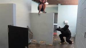 Faire L Amour Dans La Voiture : ils sont en train de faire pipi quand un gorille leur saute dessus vid o rtl people ~ Medecine-chirurgie-esthetiques.com Avis de Voitures