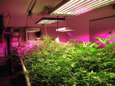 plant lights for indoor plants optimizing your plant growth with indoor grow lights