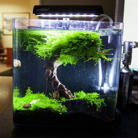 Aquascape Fish Tank by Aquascape Nano Recherche Aquascape