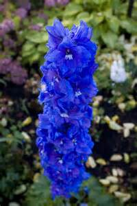 blue flower names blue flowers pictures and names