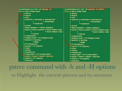 Linux Resume Process Command Line by Linux Unix Pstree Command Exles See A Tree Of