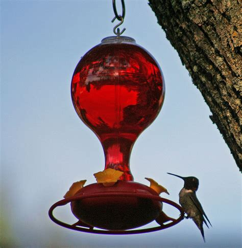 the perfect hummingbird food recipe